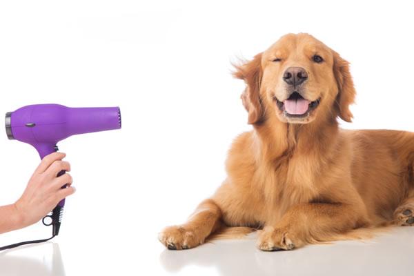 Como montar um pet shop com banho tosa e atendimento