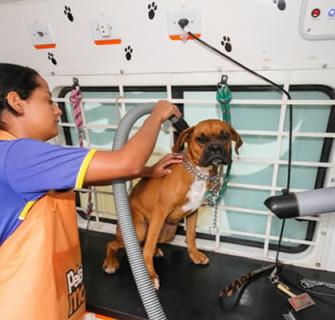Como montar um pet shop passo a passo