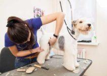 Como Montar Um Pet Shop Banho e Tosa Com Pouco Dinheiro