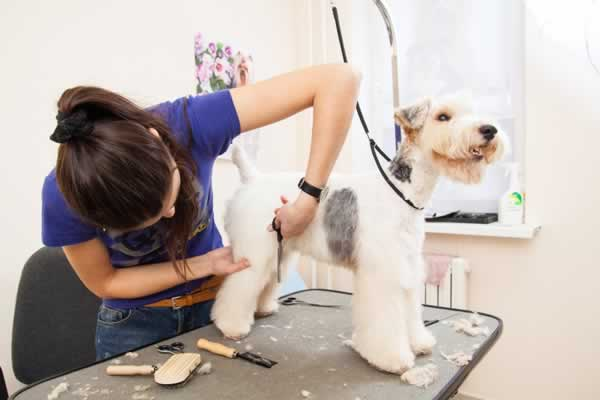 Fornecedores de Equipamentos Para Banho e Tosa Para Pet Shop