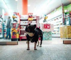 Fornecedores de Produtos Para Pet Shop