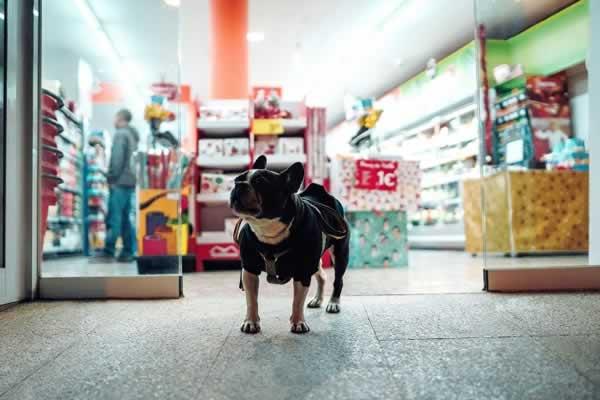 Fornecedores de Produtos Para Pet Shop no Atacado